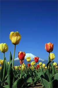 花の都.jpg